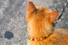 Isolat de chat de rue sur le fond, vue de face à partir du dessus photographie stock
