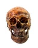 Isolat de crâne Image libre de droits