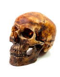 Isolat de crâne Photos libres de droits