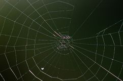 Isolat de toile d'araignée Fond de Brown images libres de droits