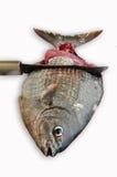 Isolat der frischen Fische auf Weißrückseitenboden, Leiste von Fischen, gesundes Lebensmittel, frischer Fisch vom Meer Stockbild