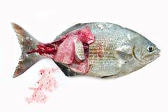 Isolat der frischen Fische auf Weißrückseitenboden, Leiste von Fischen, gesundes Lebensmittel, frischer Fisch vom Meer Stockfotos