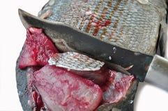 Isolat der frischen Fische auf Weißrückseitenboden, Leiste von Fischen, gesundes Lebensmittel, frischer Fisch vom Meer Lizenzfreies Stockbild