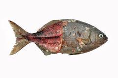 Isolat der frischen Fische auf Weißrückseitenboden, Leiste von Fischen, gesundes Lebensmittel, frischer Fisch vom Meer Stockbilder