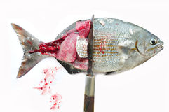 Isolat der frischen Fische auf Weißrückseitenboden, Leiste von Fischen, gesundes Lebensmittel, frischer Fisch vom Meer Lizenzfreie Stockfotografie