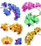 Isolat différent de beaucoup d'orchidées en une page Photos stock