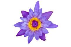 Isolat för blå lotusblomma på vit bakgrund Royaltyfria Foton