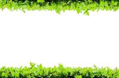 Isolat-horizontaler Blumen-Rahmen Lizenzfreie Stockfotografie