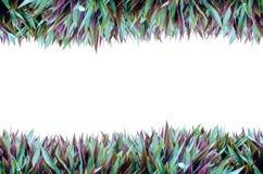 Isolat-horizontaler Gras-Rahmen Stockfoto
