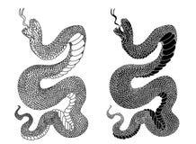 Isolat noir et blanc de cobra de serpent sur le fond blanc image libre de droits