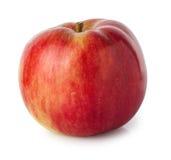 Isolat rouge de pomme Images libres de droits