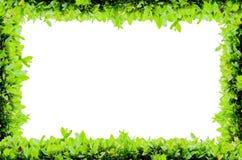 Isolat-voller Blumen-Rahmen Lizenzfreie Stockfotos