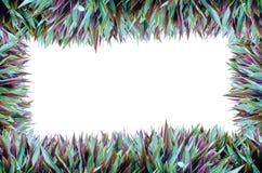 Isolat-voller Gras-Rahmen Lizenzfreie Stockfotografie