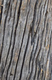 Isolate the art of the old wood texture. Selective focus with shallow depth of field Royalty Free Stock Image