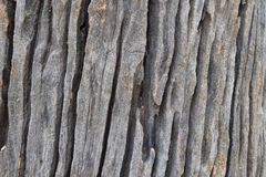 Isolate the art of the old wood texture. Selective focus with shallow depth of field Stock Photos