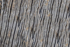 Isolate the art of the old wood texture. Selective focus with shallow depth of field Royalty Free Stock Photos