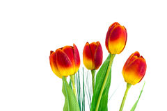 The isolate of artificial tulip flower Stock Photos