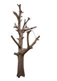 Isolate Bare Tree Branch Cut. Stock Photos