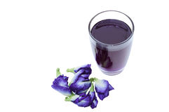 Isolate butterfly pea with clipping path Stock Photos