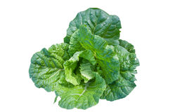 Isolate cabbage Royalty Free Stock Photography