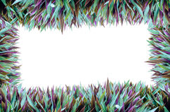 Isolate Full Grass Frame. Isolate Background  Full Grass Frame Royalty Free Stock Photography
