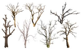 Isolate many dead trees. Royalty Free Stock Photography