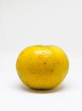 Isolate orange. With white background stock image