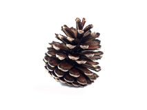 Isolate pine cone on white background stock photos