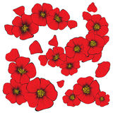 Isolate poppy flowers with petal for decorate and Royalty Free Stock Images