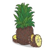 Isolate ripe ananas fruit. On white background. Close up clipart with shadow in flat realistic cartoon style. Hand drawn icon Royalty Free Stock Image