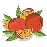 Isolate ripe oranges fruit. On white background. Close up clipart with shadow in flat realistic cartoon style. Hand drawn icon Royalty Free Stock Images