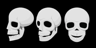 Isolate skull 3view stock images