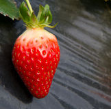 Isolate Strawberry Royalty Free Stock Images