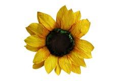 Isolate of Sunflowers stock photo