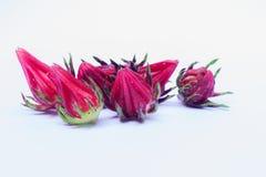 Isolate van Rosella Seeds Stock Foto's