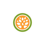 Isolated abstract green and orange color round shape tree logo. Leaf logotype. Natural cosmetics icon. Eco system Royalty Free Stock Images