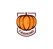 Isolated abstract orange color round shape pumpkin logo on white background, farming logotype,autumn vegetable vector Royalty Free Stock Photo