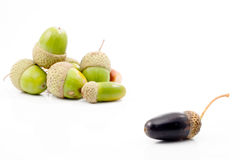 Isolated acorn. With different color from the others Stock Images