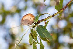 Isolated almond on tree branch stock photo