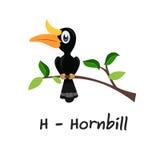 Isolated animal alphabet for the kids,H for Hornbill Stock Image