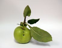 Isolated Apple Stock Image