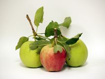 Isolated Apples. Isolated shot of 3 Apples royalty free stock photo