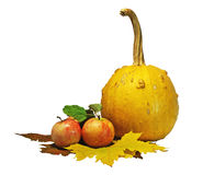Isolated apples and pumpkin. Apples and pumpkin on the autumn leaves with clipping path Stock Images