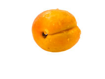 Isolated apricot. Greate orange colour an isolated apricot Stock Image