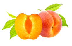 Isolated apricots. Fresh apricot fruits isolated on white background royalty free stock photos