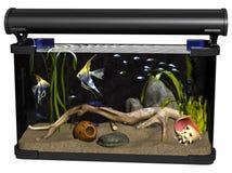 Isolated aquarium illustration Stock Image