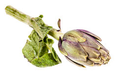 Isolated Artichoke Stock Image