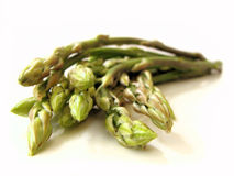 Isolated Asparagus Royalty Free Stock Images