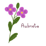 Isolated aubrieta plant Royalty Free Stock Photo