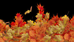 Isolated Autumn Leaves on black background Royalty Free Stock Photography
